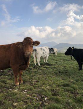 Week end a Parma: consigli rapidi su cosa mangiare e vedere