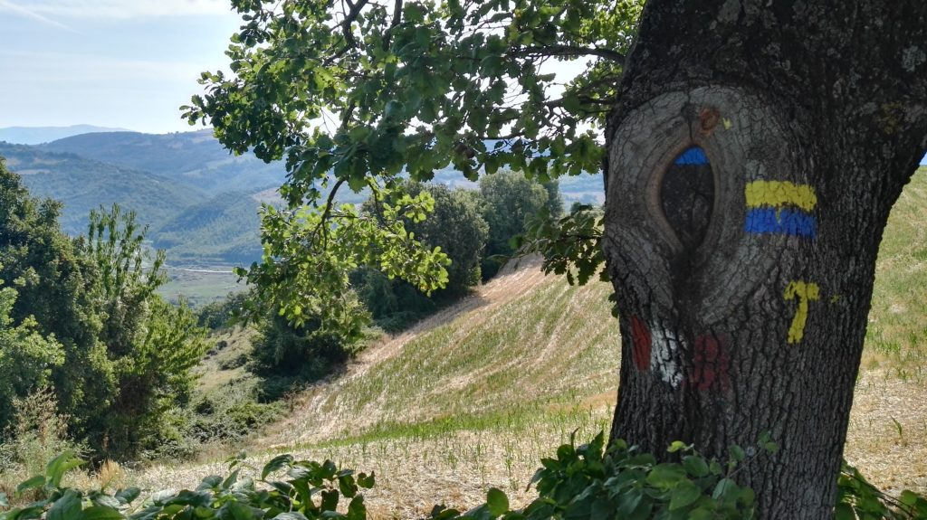 il Tau Giallo da seguire lungo il cammino di San Francesco